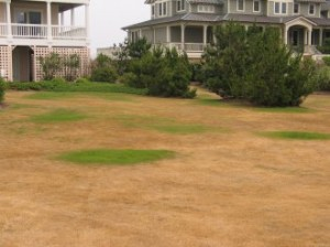 Drought Riddled Lawn